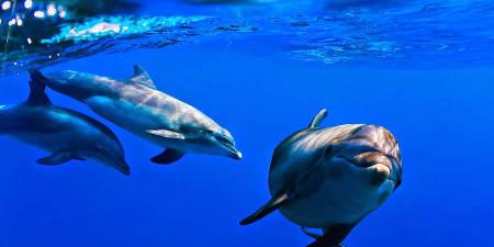 Observación de cetáceos